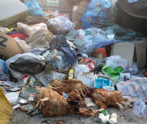 Nicosia, trovate carcasse di animali morti nei punti di raccolta dei rifiuti, ci si avvia verso la loro chiusura