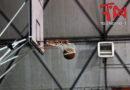 Basket, Città di Nicosia sconfitto nel derby contro Regalbuto
