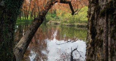 Nicosia, approvato un progetto esecutivo per quasi mezzo milione di euro per valorizzare l'ecosistema della riserva Campanito-Sambughetti