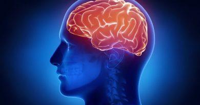 Humanitas, così il cervello si protegge dalle infiammazioni intestinali